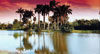 Tall Palm trees at sunset with reflection